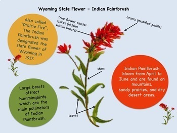 Music, History & Science: Mountain States Flowers and Songs