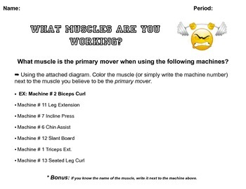 Musical Circuit Training & Muscle Activity