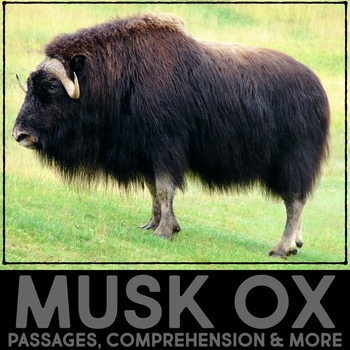Musk Ox Informational Article, QR Code Research & Fact Sort