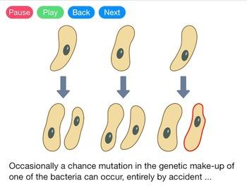 Mutations (Video)