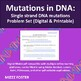 Mutations in DNA: Single strand DNA mutations Problem Set