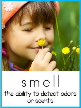 My 5 Senses: A Preschool and Kindergarten Pack