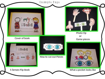 My 5 Senses Interactive Book