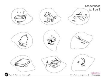 My 5 Senses in Spanish- NEW BUNDLE