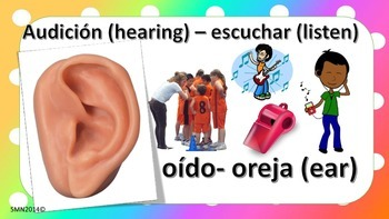 My 5 senses - English & spanish version