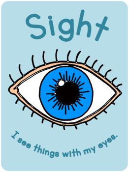 My 5 senses poster