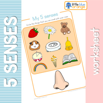 The Five Senses Worksheets Teaching Resources Teachers Pay Teachers