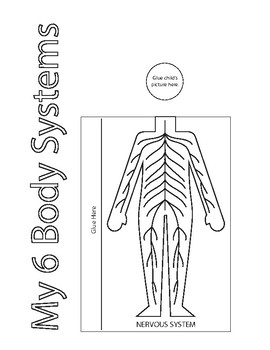 My 6 Body Systems