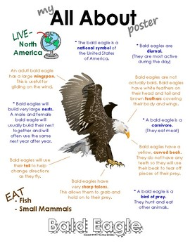 My All About Bald Eagle Book / Workbook - North American Animal