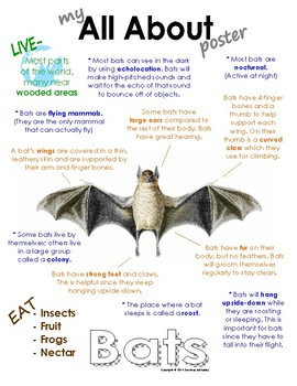 Printable Bat Book & Worksheets | Teachers Pay Teachers