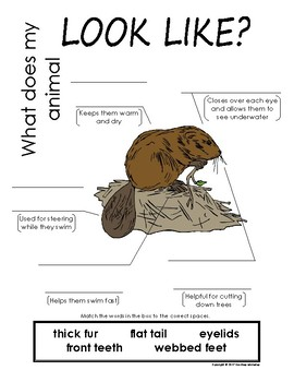 My All About Beavers Book / Workbook - (Forest / Woodland Animals)