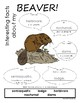 My All About Beavers Book / Workbook - (Forest / Woodland
