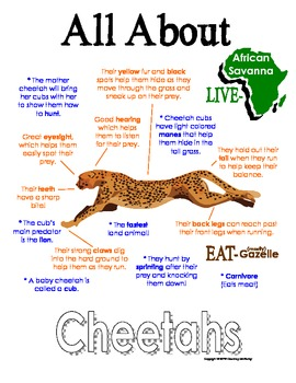 My All About Cheetahs Book / Workbook - African Animal Unit Study