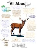 My All About Deer Book / Workbook - (Forest / Woodland Animals)