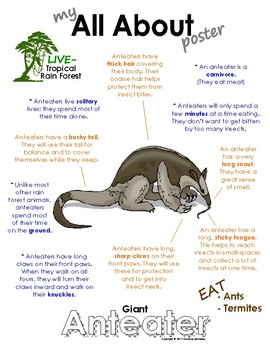 My All About Giant Anteaters Book - (Tropical Rain Forest/Jungle Animals)