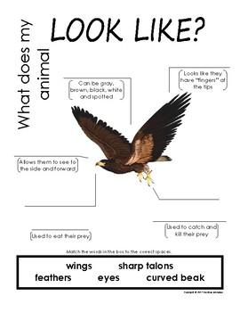 My All About Hawk Book / Workbook - (Forest / Woodland Animals)