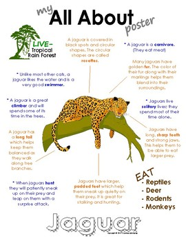 My All About Jaguars Book / Workbook - (Tropical Rain Forest/Jungle Animals)