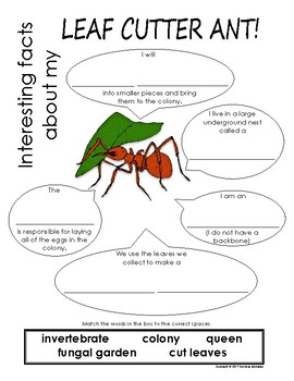 My All About Leaf Cutter Ants Book - (Tropical Rain Forest/Jungle Animals)