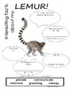 My All About Lemurs Book / Workbook - (Tropical Rain Forest/Jungle Animals)