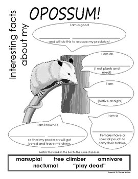 My All About Opossums Book / Workbook - (Forest / Woodland Animals)
