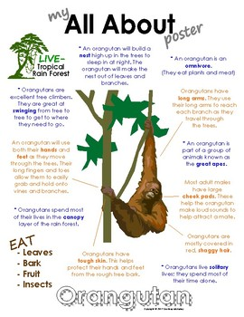 My All About Orangutans Book / Workbook - (Tropical Rain Forest/Jungle Animals)