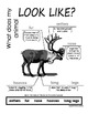 My All About Polar Animals Books - Bundle Pack (5) - Arctic & Antarctic animals