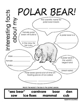 My All About Polar Bears Book - (Arctic/Polar Animals)