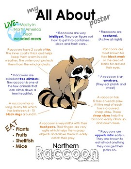 My All About Raccoon Book / Workbook - (Forest / Woodland Animals)