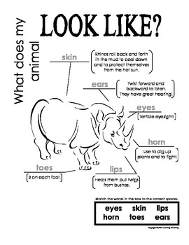 My All About Rhinoceroses Book / Workbook - African Animal Unit Study