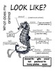 My All About Sea Horses Book - Ocean Animal Unit Study