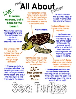 My All About Sea Turtles Book - Ocean Animal Unit Study
