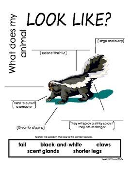 My All About Skunks Book / Workbook - (Forest / Woodland Animals)