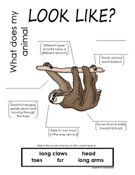 My All About Sloths Book / Workbook - (Tropical Rain Forest/Jungle Animals)