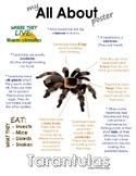 My All About Tarantulas Book / Workbook - (Desert Animal / Nocturnal)