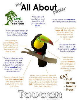 My All About Toucans Book / Workbook - (Tropical Rain Forest/Jungle Animals)