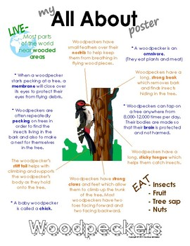 My All About Woodpeckers Book / Workbook - ( Forest / Wood