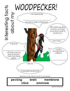 My All About Woodpeckers Book / Workbook - ( Forest / Woodland Animals )