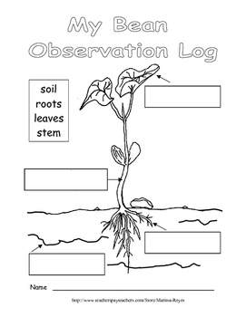 Life Cycle of a Green Bean Plant and Observation Log