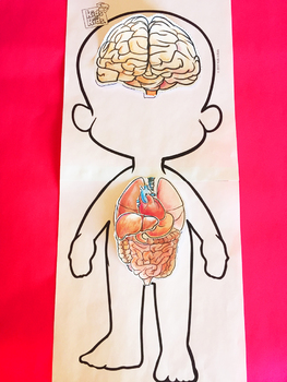 Human Body Systems and 5 Senses