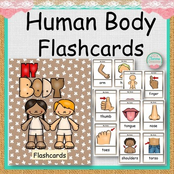 HUMAN BODY PARTS Flashcards