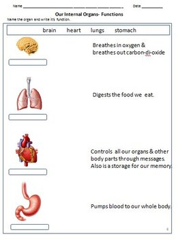 Body - Internal Organs, Bones, Joints & Muscles- Worksheets for ...