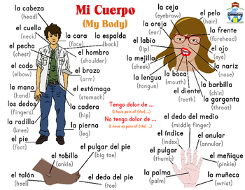 My Body Mi Cuerpo Learn Body Parts English & Spanish