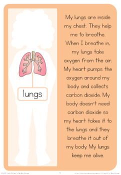 My Body  book 3 - internal organs