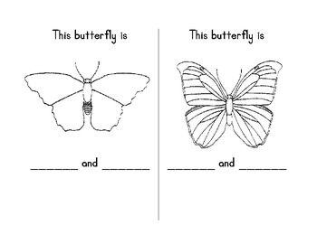 My Butterfly Book
