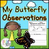 My Butterfly Observation