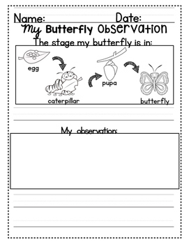 My Butterfly Observation