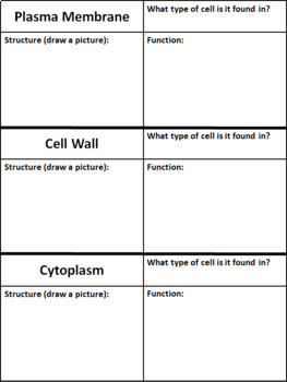 The Cell: My Cell Book Activity Rubric Included!