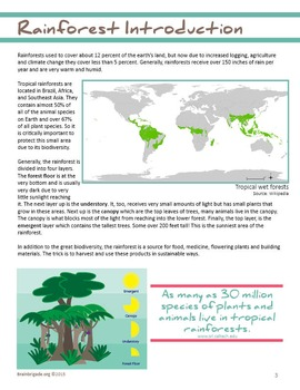 My Classroom is a Jungle! | Make a Tropical Rainforest in your Classroom