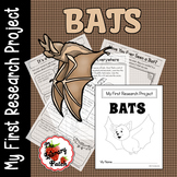 Bat Research Report