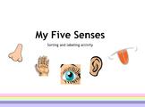 My Five Senses activity
